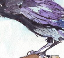 The playful Crow - Coco Sticker
