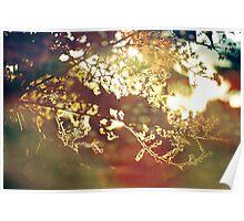 summer light Poster