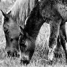 Wild Horses 1 by Mickey Hatt