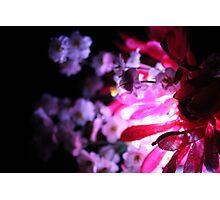 Crimson Photographic Print