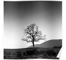 Lone Tree, Southern Upland Way, Scottish Borders Poster