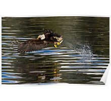 Hunting Bald Eagle Poster