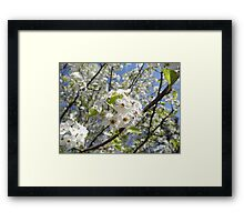 flowering pair tree Framed Print