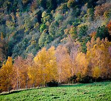 Autumn, Scott's View, Scottish Borders by Iain MacLean