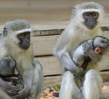 Caring,loving ,protective moms ! by jozi1