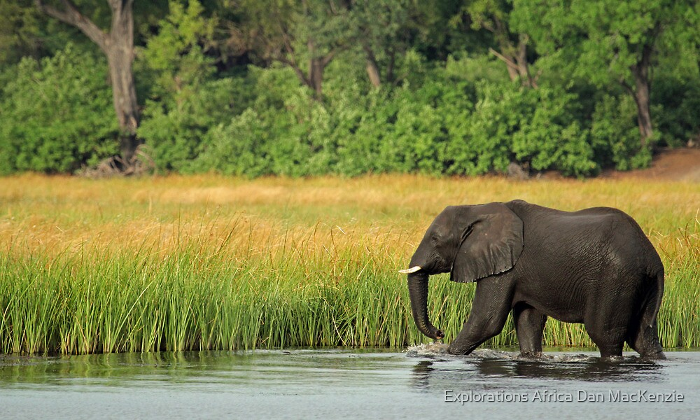 Guardians of King's Pool by Explorations Africa Dan MacKenzie