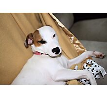 Hey, Puppy Trying To Sleep Here!! Photographic Print