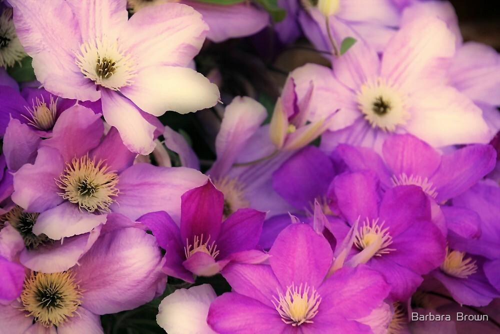 Shades of Purple by Barbara  Brown