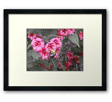 Bumble Bee Flower Framed Print