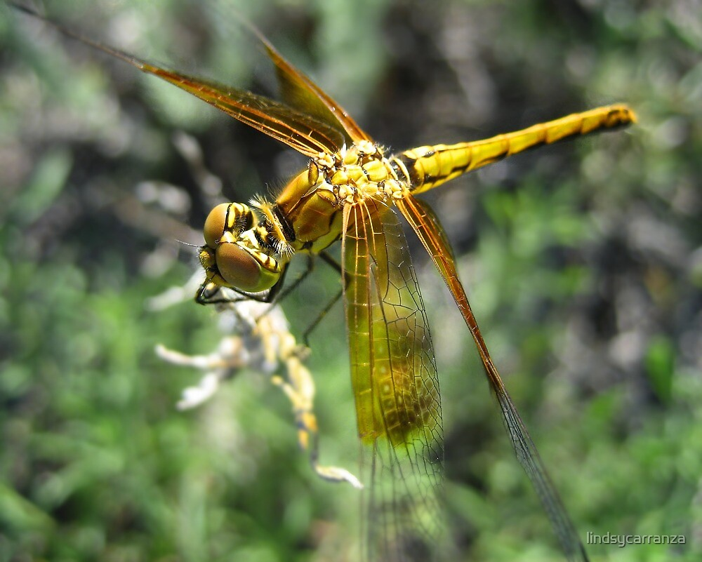Golden Yellow Dragonfly by lindsycarranza