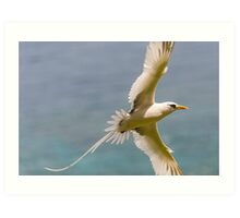 Flight of the Golden Bosun Art Print