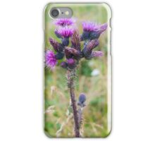 Purple Alpine Thistle, Photographed in Austria, Tyrol iPhone Case/Skin