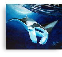 Manta ray diving down Canvas Print