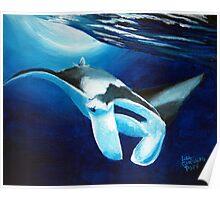 Manta ray diving down Poster
