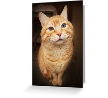 I Know, I Know, I am the Cutest Kitty in the Whole World.  Greeting Card