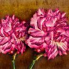 Carnations by Keri Harrish