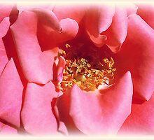 Pink beauty by KatarinaD