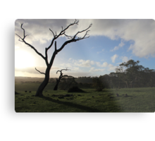 Summit Fire Track, Mount Barker Springs, South Australia Metal Print