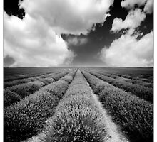 Neverending Lavender Field by MoGeoPhoto