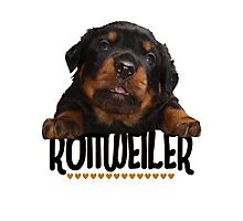 Rottweiler Love Photographic Print