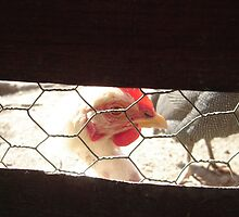 Photographer in a Cage by LacerdaZoom