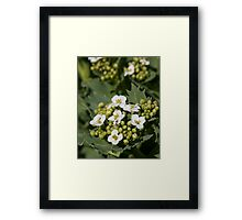 What Nature Intended Framed Print