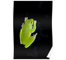 Froggie in the dark  Poster