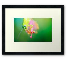 Boggly Eyes - grasshopper on hibiscus Framed Print