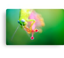 Boggly Eyes - grasshopper on hibiscus Canvas Print