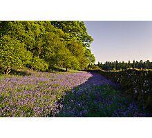 Loch Ken Bluebells Photographic Print
