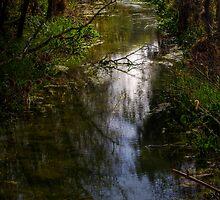 Chadwick Lake  by Bokeh  Photography