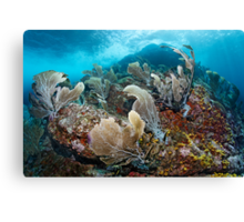 The Wild Site Canvas Print