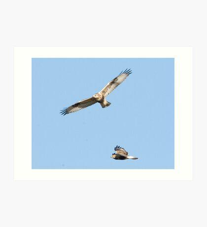 Two Rough Legged Hawks on the Hunt Art Print
