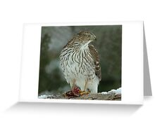Sharp Shinned Hawk at Lunch Greeting Card