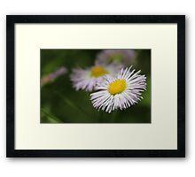 Wetland Wild Flower Framed Print