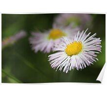 Wetland Wild Flower Poster