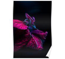 Violet Flame Poster