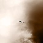 On the Wings of a Storm by Natalie Cooper