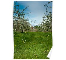 The Orchard 1 Poster