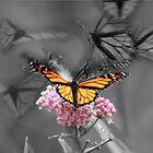 Butterfly Effect by Emily Barnes