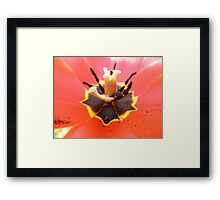 Red Tulip Flower Framed Print