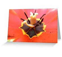 Red Tulip Flower Greeting Card