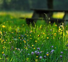 Sit Among The Wild Flowers by Simon Pattinson