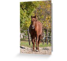 Ashley - NNEP Ottawa, ON Greeting Card