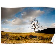 Tree from Lindinny Woods/Southern Upland Way, Scottish Borders Poster