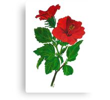 A Red Hibiscus Flower Isolated On White Background Canvas Print