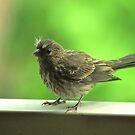 Finch by Robin Lee