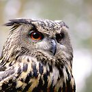 Eagle Owl by Mark Baldwyn