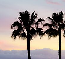 Palm trees at sunrise by Thomas Tolkien