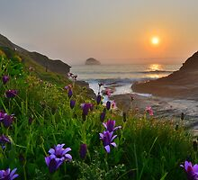 Cornwall: Spring Colours at the Strand by Rob Parsons